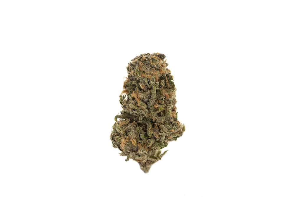 The Winners of the 2019 Seattle Cannabis Cup aka DOPEland